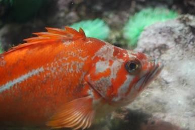 Aquarium067